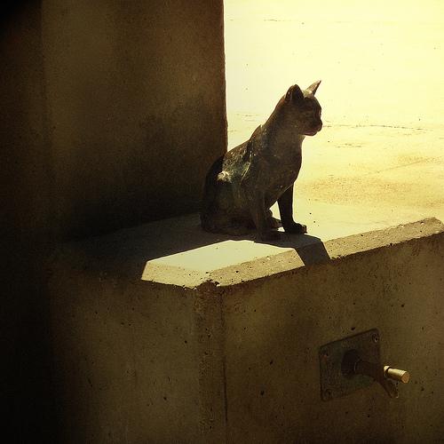Stone cat foto de Matthew J Spencer