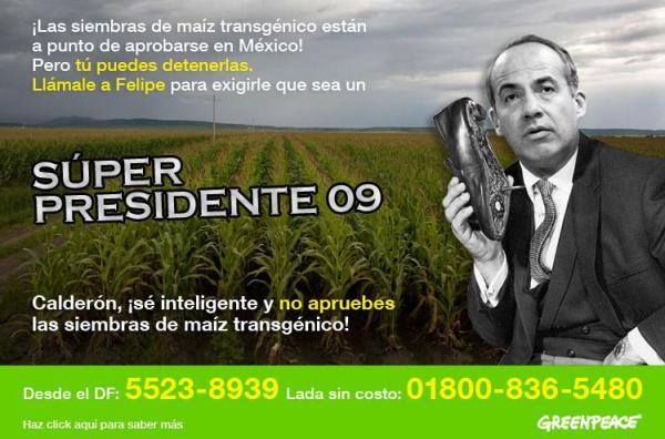 Maiz transgen Calderon 09