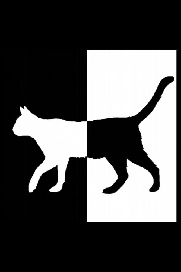 Gato_blanco_negro