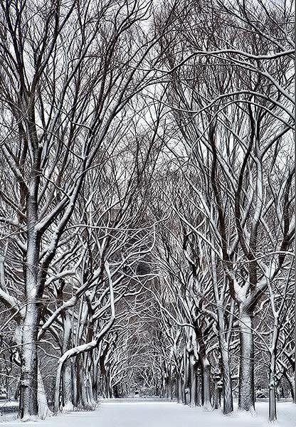 Central Park feb_2013
