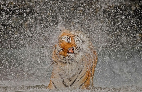 foto de Ashley Vincent, ganadora del premio 2012 a mejor fotografía del National Geographic